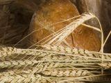 Creatorii de paine la Targul Taranului Roman