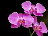 Cum sa ingrijesti orhideea