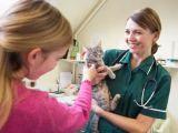 9 semne care indica probleme de sanatate la pisici