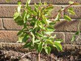 Sfatul expertului: Cum taiem pomii fructiferi