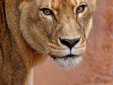Cum functioneaza un safari