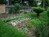 Ce legume si verdeturi plantezi in gradina ta de primavara