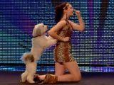 Catelul Pudsey a castigat concursul Britain's Got Talent