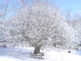 Protejarea merilor pe timpul iernii: 5 pasi esentiali