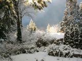 Curatenia gradinii de iarna in 5 pasi