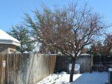 Invata sa iti protejezi piersicul in sezonul rece