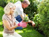 7 beneficii ale gradinaritului pentru sanatate