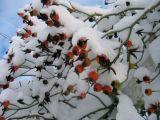 5 ingrijiri de baza ale fructelor in timpul iernii