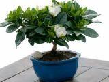 Plante Feng Shui care atrag prosperitatea si fericirea in casa ta