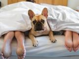 4 motive pentru a renunta sa mai dormi cu cainele in pat