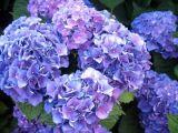 6 flori de gradina cu semnificatii ascunse