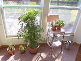Cum sa previi uscarea plantelor cand pleci in vacanta vara
