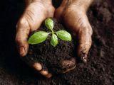 Cum sa prepari singur compostul pentru gradina