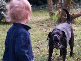 Cum iti ajuti copilul sa previna un atac al unui caine