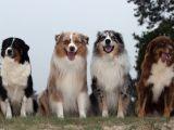 5 rase de caini hiperactivi