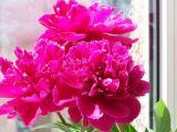 Flori Feng Shui: 8 ponturi care aduc norocul la tine acasa!