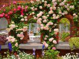6 trandafiri usor de cultivat in gradina ta. Iata ce soiuri poti planta!