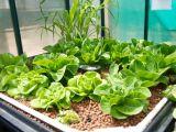 Ai sera? Iata 5 legume pe care le poti cultiva iarna aceasta!
