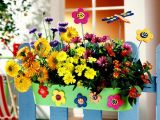 5 combinations of flowers     jardinierele plant of the balcony