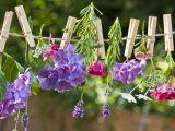5 ornamente inedite pentru gradina ta