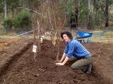 Cum sa plantezi pomii fructiferi in gradina