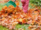 Gradinaritul in luna noiembrie! Ce trebuie sa faci luna aceasta in gradina