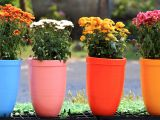 How to protect flower pots with  , plant ice
