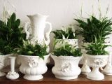 3 plant talisman that draw happiness