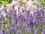 Top 3   medicinal herbs that the to you need ai in Garden in 2016