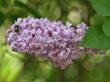 5 flori comestibile pe care trebuie sa le ai in gradina