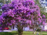 3 arbori ornamentali pe care trebuie sa-i ai in gradina