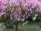 Expertul Acasa.ro, Cristina Stinghe: Tunderea pomilor fructiferi in februarie