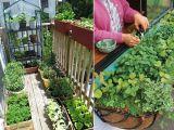 Gradina cu legume din balcon! Iata ce poti creste la bloc