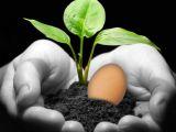 Apa in care fierbi ouale, benefica pentru plante