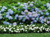 3 arbusti care infloresc toata vara, pefecti pentru o gradina mica