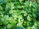 Plante aromatice ce nu trebuie sa lipseasca din nicio gradina