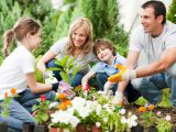 Calendar gradinarului for  ! month June What activities of the no gardening needs to Miss