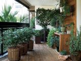 "3   plant  , apartment for easy care, the that no you can  ""ucide"""
