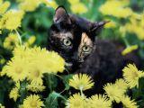 De ce nu trebuie sa lasi pisica acasa cand pleci in concediu