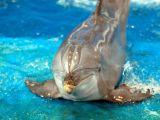 Expertul Acasa.ro, Carmen Neacsu: Unde poti inota cu delfinii