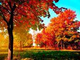 arbori toamna