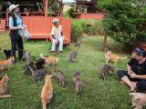 Lanai - Santuarul de pisici
