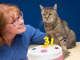 Cea mai batrana pisica din lume a implinit 31 de ani