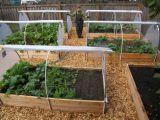 Pregateste din timp gradina de legume pentru iarna
