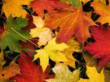 Decoratiuni din frunze, gata in 5 minute! Le poti face chiar tu