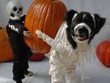 Cele mai amuzante costume de Halloween pentru animale