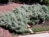 Planta tamaduitoare ce nu trebuie sa lipseasca din nicio gradina