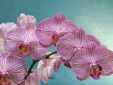 Cum sa ai o orhidee frumoasa! Secretele florareselor, pe care nimeni nu ti le spune