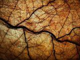 4 lucruri inedite despre frunzele de trabuc