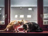 De ce este bine sa ai o pisica. 5 beneficii pe care le aduc sanatatii